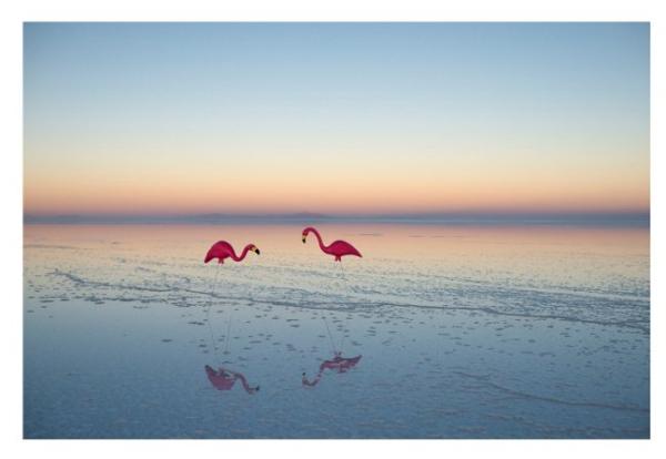 Gray Malin Flamingos